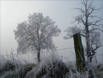 Niederrhein, Eis, Baum, Winter