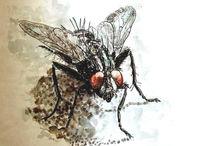 Malerei, Fliege, Tiere, Insekten
