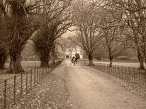Kutsche, Park, Schloss, Fotografie