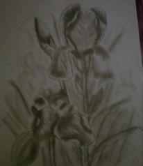 Zeichnung, Blumen, Zeichnungen, Stillleben