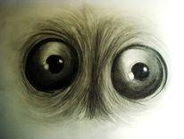 Tiere, Beobachtung, Augen, Bleistiftzeichnung
