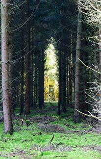 Falle, Natur, Nadelbäume, Schein