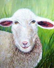 Grün, Tiere, Schaf, Ohr