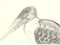 Vogel, Bleistiftzeichnung, Tiere, Zeichnung