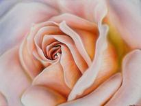 Rose, Zart, Malerei, Pflanzen