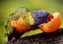 Sprühdose, Airbrush, Papagei, Malerei