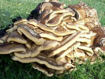 Pilze, Natur, Fotografie, Architektur