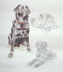 Bleistiftzeichnung, Kohlezeichnung, Labrador, Hund