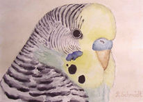 Wellensittich, Tierportrait, Vogel, Aquarellmalerei