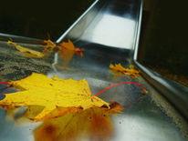 Trocknen, Blätter, Natur, Shade