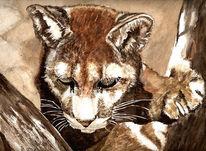 Tiere, Katze, Puma, Aquarellmalerei