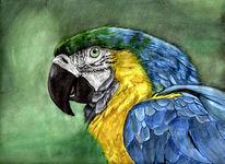 Blau, Tiere, Aquarellmalerei, Grafik
