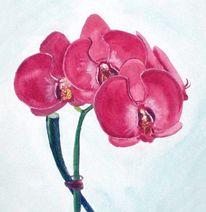 Pflanzen, Lila, Blumen, Rot