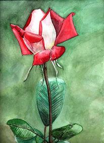 Rose, Blumen, Pflanzen, Aquarellmalerei