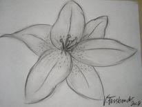 Blumen, Skizze, Zeichnungen