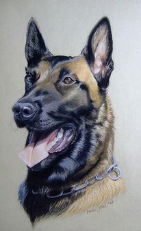 Hund, Gebrauchshund, Hundeportrait, Pastellmalerei
