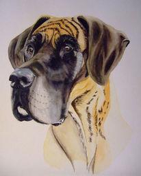Hund, Portrait, Aquarellmalerei, Dogge