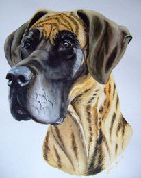 Portrait, Hund, Dogge, Aquarellmalerei