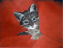 Tierportrait, Katze, Portrait, Pastellmalerei