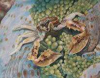 Gouachemalerei, Krabbe, Seeanemone, Aquarell