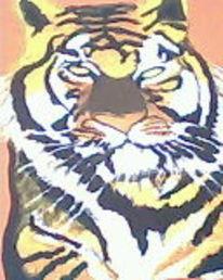 Orange, Hintergund, Rot, Tiger