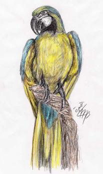 Papagei, Ornithologie, Linne, Biologie