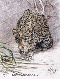 Jaguar, Linnaeus, Tiere, Raubtier