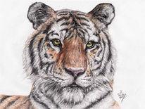 Tigris, Tiger, Linnaeus, Panthera