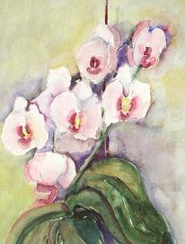 Blumen, Pflanzen, Natur, Orchidee