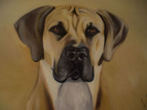 Tiere, Haustier, Hund, Portrait