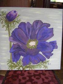 Natur, Blumen, Lila, Blüte