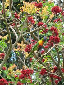 Farben, Traumzeiten, Vogel, Australien