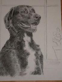 Portrait, Zeichnung, Kohlezeichnung, Tiere