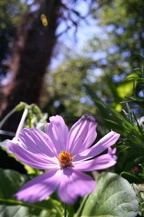 Landschaft, Fotografie, Blumen, Lavendel