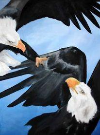 Vogel, Tiere, Seeadler, Angriff