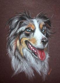 Tierportrait, Hundeportrait, Australien, Stafford