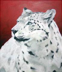 Tiere, Tierportrait, Schneeleopard, Leopard