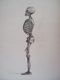 Knochen, Anatomie, Skelett, Zeichnungen