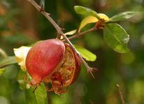 Fotografie, Apfel, Stillleben, Sizilien