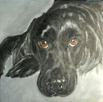 Tiere, Hund, Portrait, Beobachten