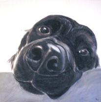 Tiere, Schwarz weiß, Portrait, Hund