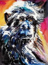 Affe, Blick, Tiere, Farben