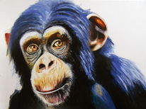 Schimpanse, Ausdruck, Blick, Tiere