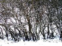 Äste, Fotografie, Landschaft, Schnee
