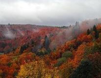Herbst, Nebel, Tal, Fotografie