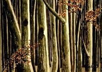Winter, Baum, Landschaft, Wald