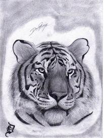 Zeichnen, Fell, Zeichnung, Tiger