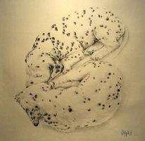Schlaf, Hund, Zeichnung, Tierportrait