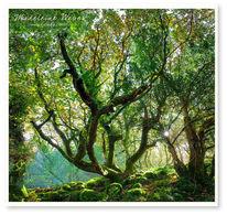 Irland, Landschaft, Wald, Fotografie