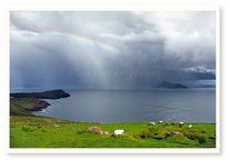 Irland, Schaf, Wolken, Landschaft